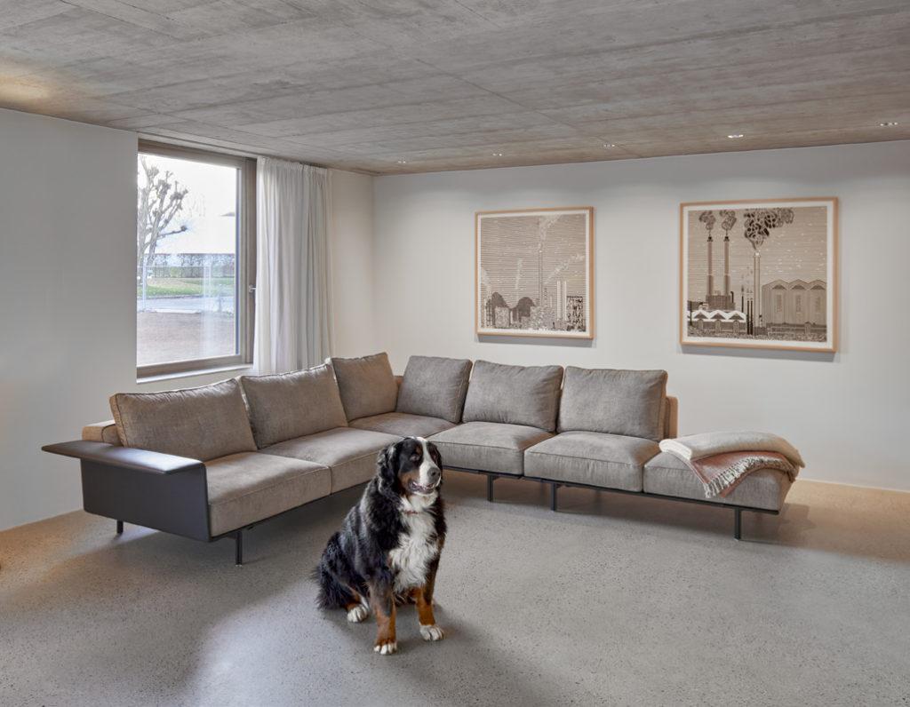 Villa contemporaine en béton vue séjour avec chien